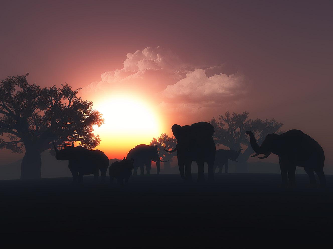vegan travel guide in africa